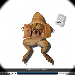 Free Virtual Frog Dissection