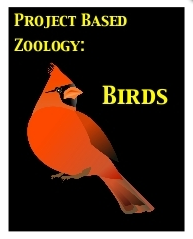 Free Bird Flight Mechanics Video