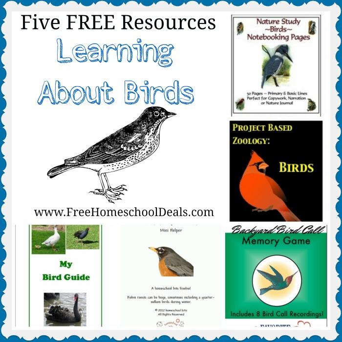 Learn about birds homeschool