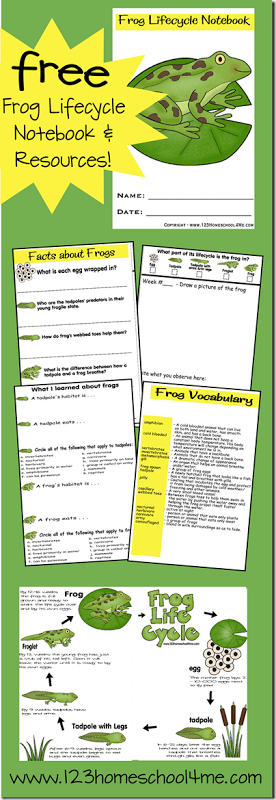 Free Frog Lifecycle Printable Notebook & Resources
