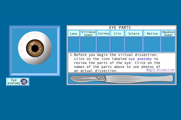 Free Virtual Eye Dissection