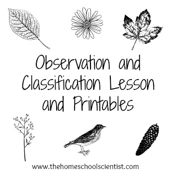 Free Observation and Classification Lesson Printables