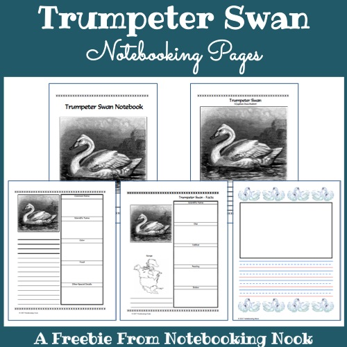 Trumpter Swan Notebooking Pages