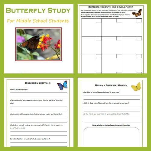 Free Butterfly Study Worksheets