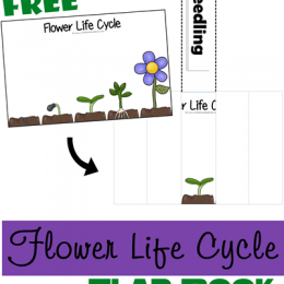 FREE FLOWER LIFE CYCLE FLIP BOOK (instant download)