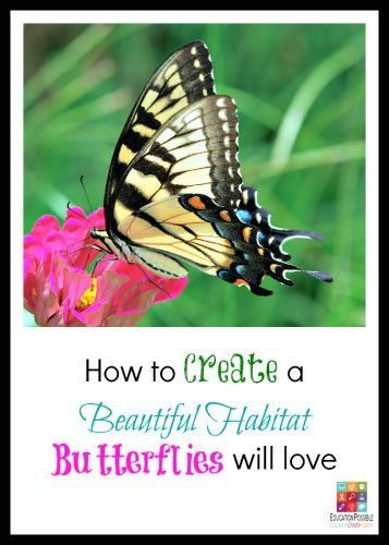 Create Butterfly Garden
