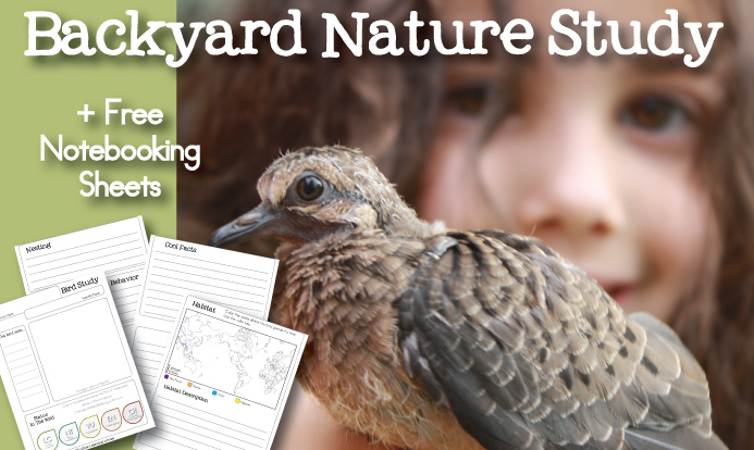 FREE Bird Nature Study Notebooking Pages