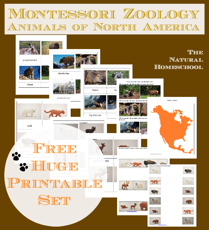 FREE North America Animals Printable Set