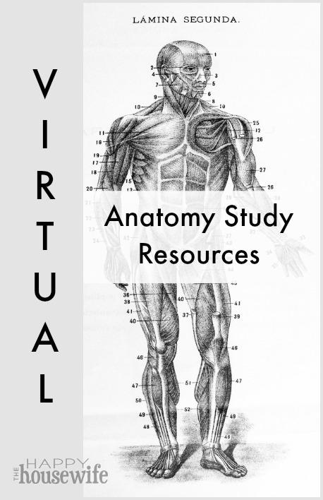 FREE Anatomy Study