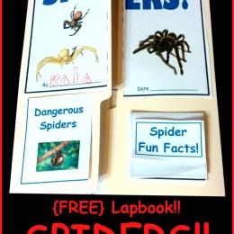FREE Spider Lapbook