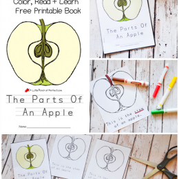 image relating to Parts of an Apple Printable identify Free of charge Elements of the Apple Printable Booklet