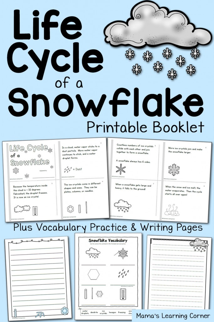 Snowflake Life Cycle Booklet and Vocabulary Practice