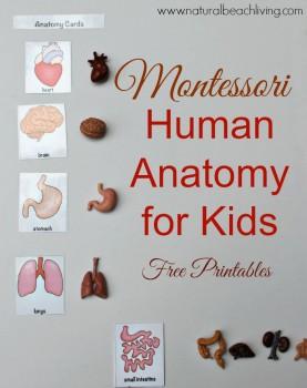 FREE Human Anatomy for Kids
