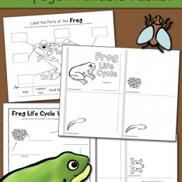 FREE Frog Life Cycle Pack