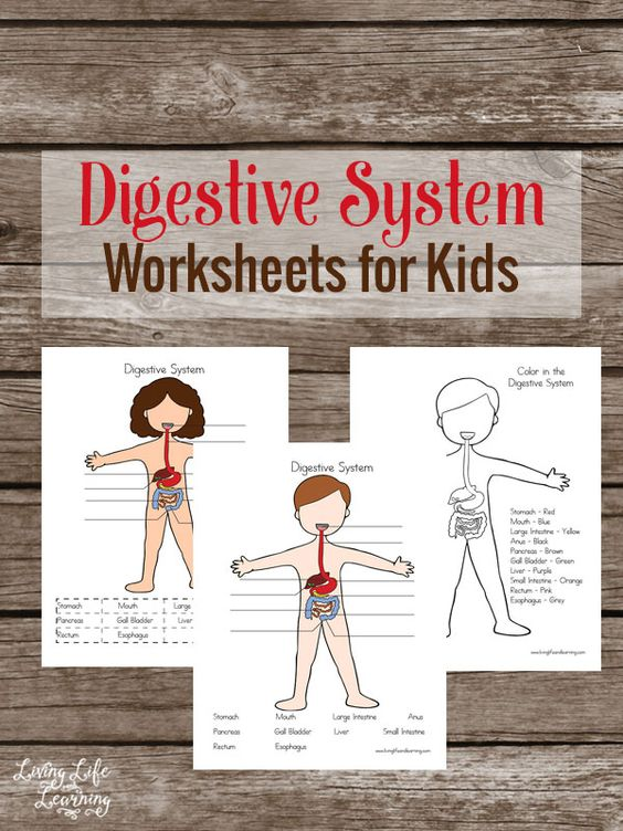 FREE Human Body Digestion Pack
