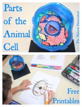 FREE Animal Cell Worksheet