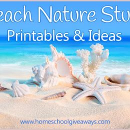 FREE Beach Nature Study Printables and Ideas