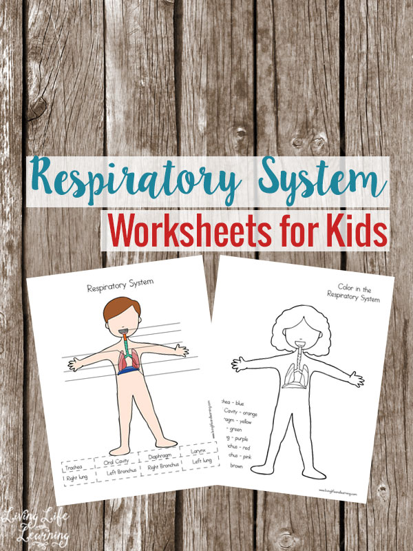 FREE Respiratory Worksheets for Kids