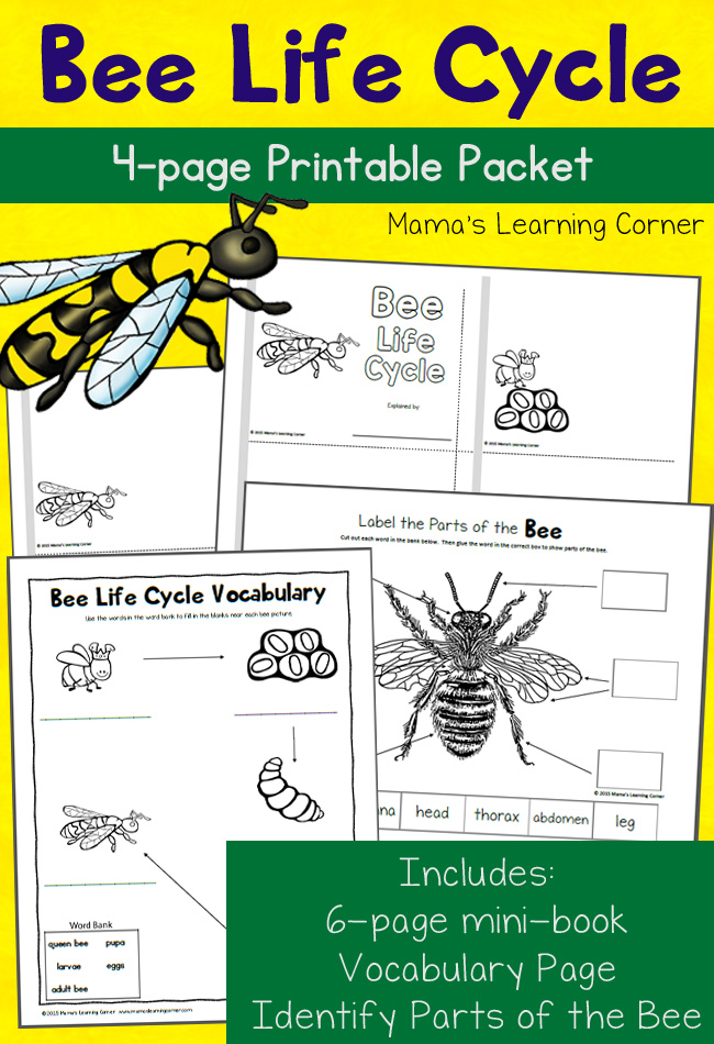 FREE Bee Life Cycle Pack