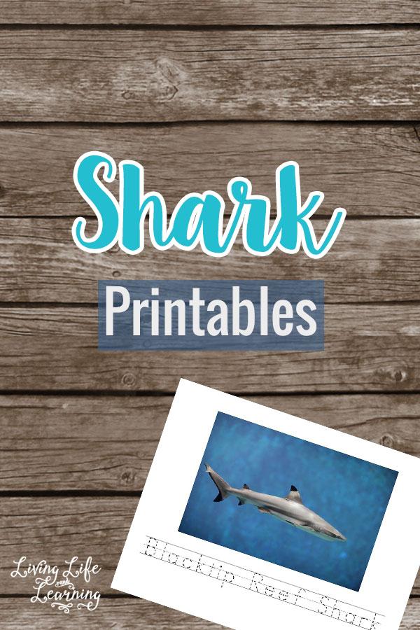 FREE Shark Printables
