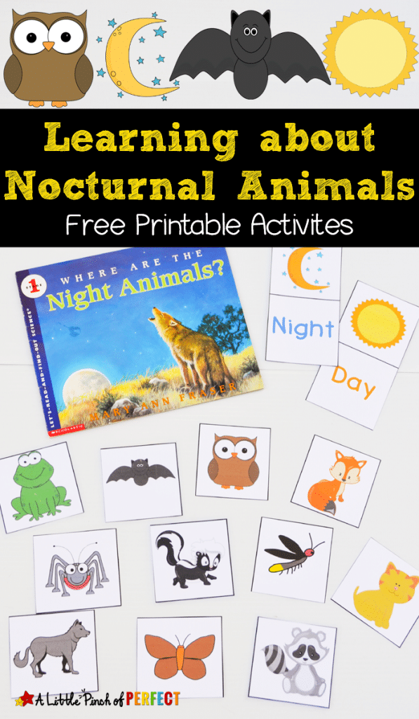 Image of: Animales Nocturnos Free Nocturnal Animals Free Homeschool Deals Free Nocturnal Animals Printables