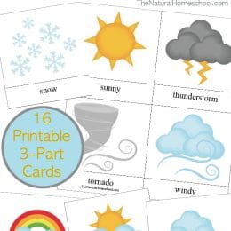 FREE Weather Words (3-part cards)