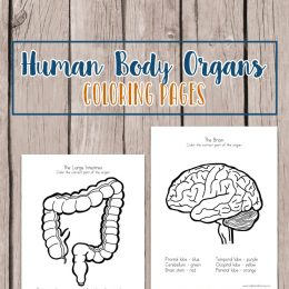 Free Human Body Organs Coloring Pages