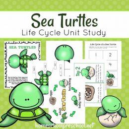 Free Preschool Sea Turtle Life Cycle Unit Study