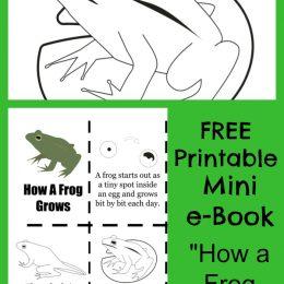 Free Frog Life Cycle Mini-Book