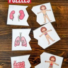 Free Human Body Puzzles