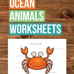Free Ocean Animals Science Worksheets
