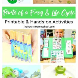 free frog life cycle hands-on printable activities