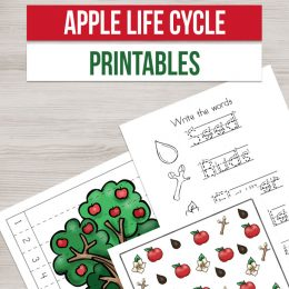 FREE Apple Life Cycle Printables