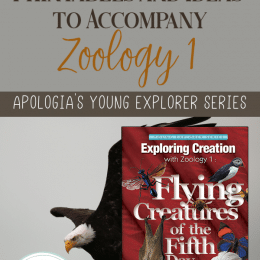 FREE Printables and Ideas for Apologia's Zoology 1: Flying Creatures