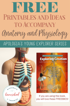 FREE Printables and Ideas for Apologia's Anatomy and Physiology
