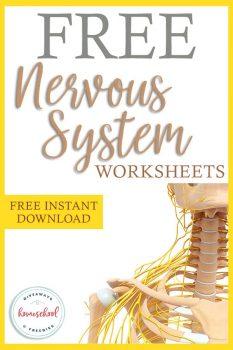 FREE Printable Nervous System Worksheets