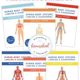 FREE Human Body Systems Labeling Sheets