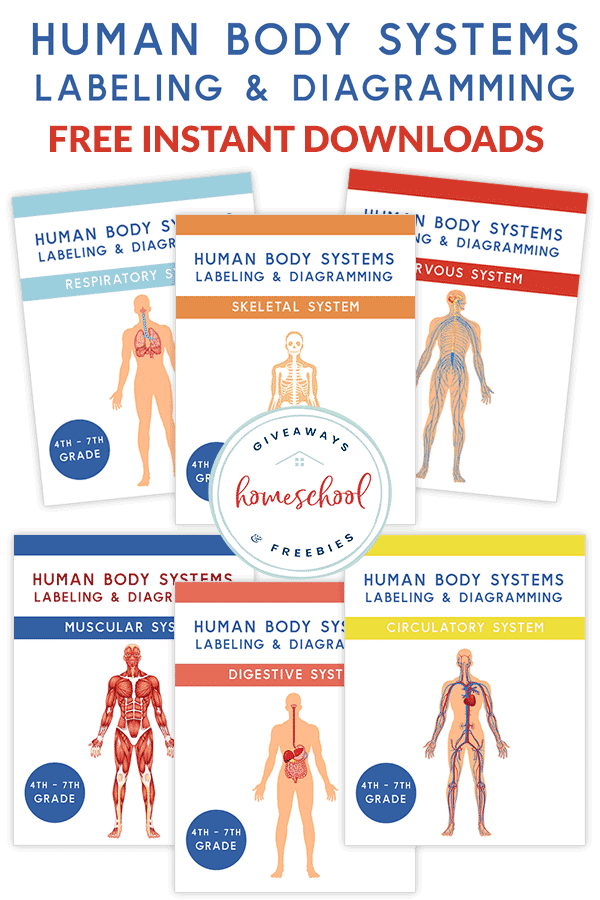 FREE Human Body Systems Labeling Sheets   Free Homeschool ...