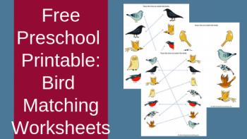 FREE Bird Matching Worksheets