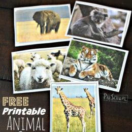 FREE Montessori-Inspired Activity + Animal Cards!