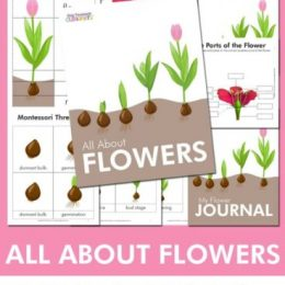 FREE All About Flowers Unit Study