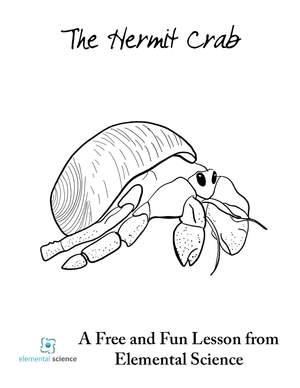 FREE Hermit Crab Unit Study