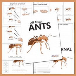 Ant-loving students will enjoy this FREE Life Cycle of an Ant Unit Study! #fhdhomeschoolers #freehomeschooldeals #hsfreebies #homeschoolscience #lifecycles