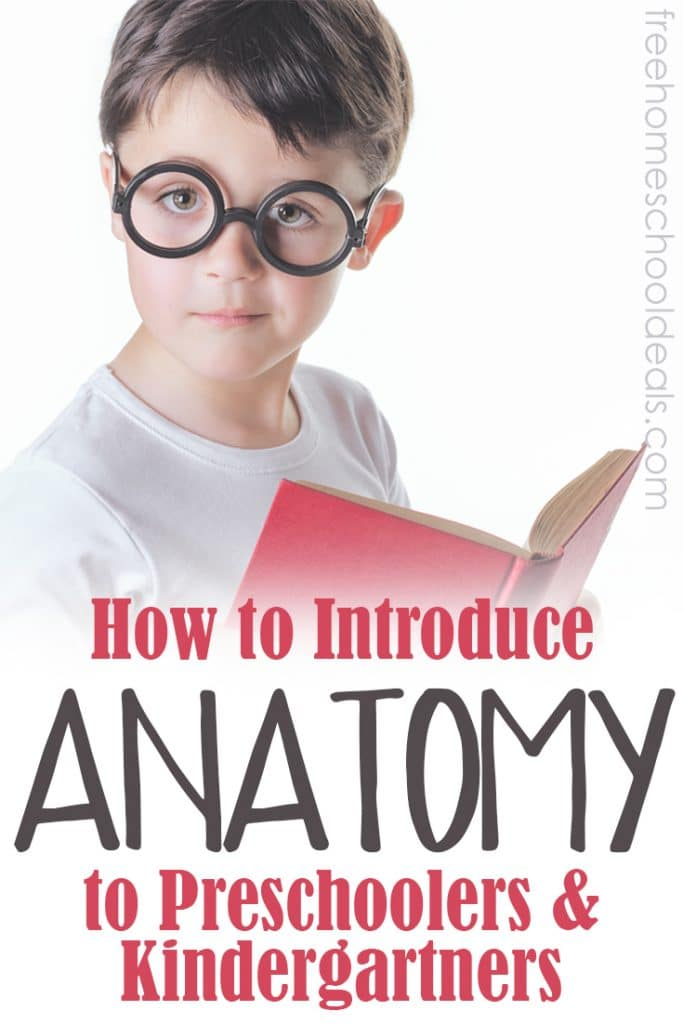 Check out these tips on How to Introduce Anatomy to your Preschoolers & Kindergartners! Plus a printable pack! #fhdhomeschoolers #freehomeschooldeals #hsmamas #anatomy #homeschoolscience