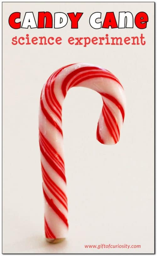 Your kids will enjoy this Free candy cane science experiment to explore STEM for the holidays. Grab some candy canes and get started! #freehomeschooldeals #fhdhomeschoolers #STEM #christmasscience