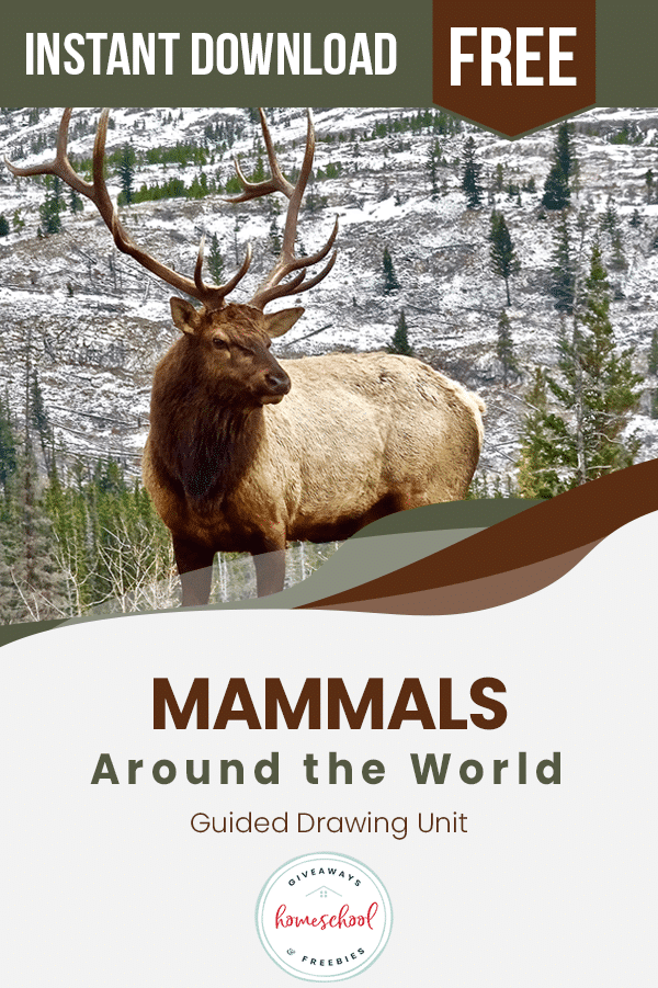FREE Guided Drawings of Mammals around the World. #guideddrawingmammals #fhdhomeschoolers #freehomeschooldeals