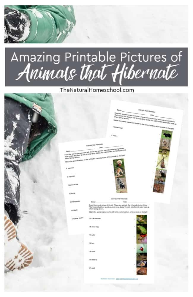 Hibernating Animals FREE Printable Pictures. #fhdhomeschoolers #freehomeschooldeals #hibernatinganimals #amazingpictures #hibernation