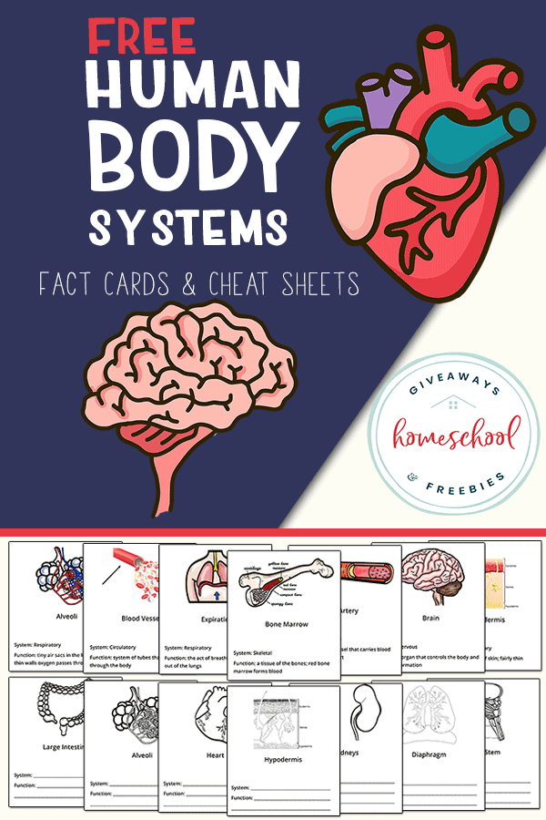 Body Systems FREE Printables. #fhdhomeschoolers #freehomeschooldeals #bodysystems #anatomyprintables