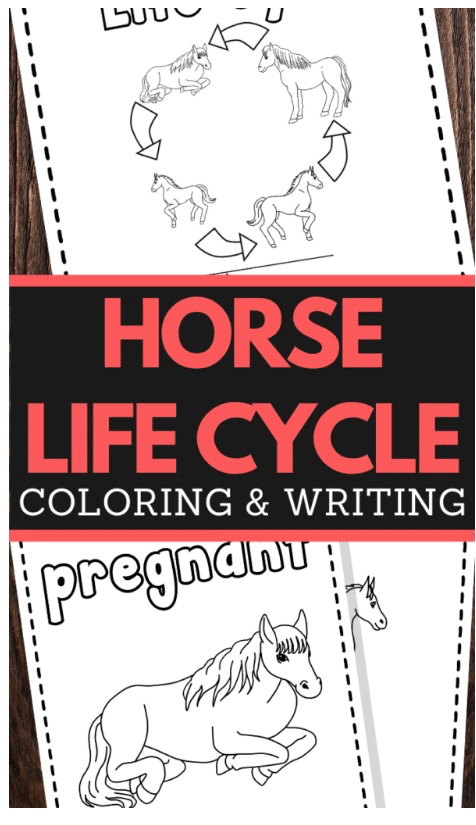 FREE Horse Life Cycle Printable. #freehomeschooldeals #fhdhomeschoolers #horselifecycle #horseprintables #lifecycleofahorse