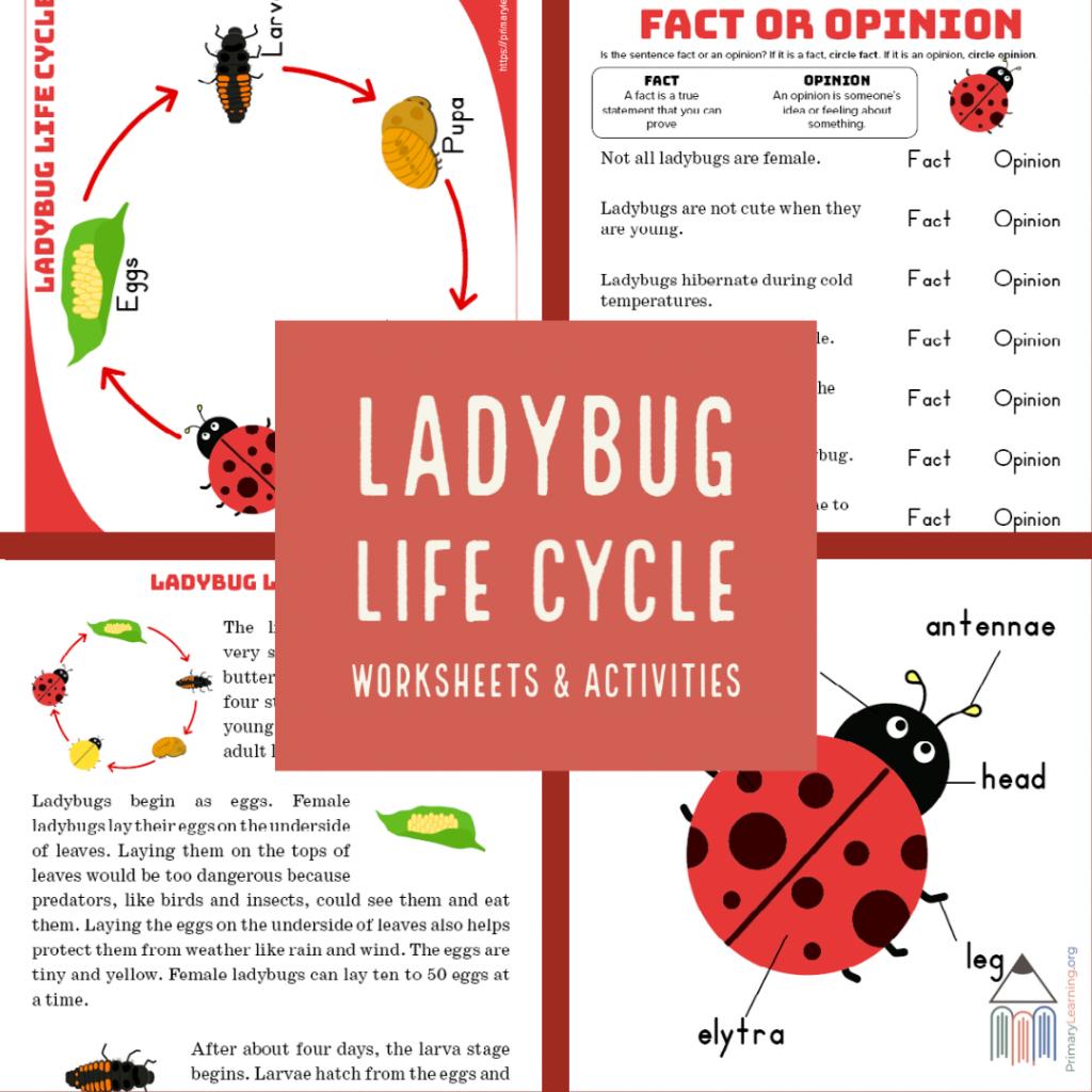 FREE Ladybug Life Cycle Resources. #freehomeschooldeals #fhdhomeschoolers #ladybuglifecycle #ladybugprintables